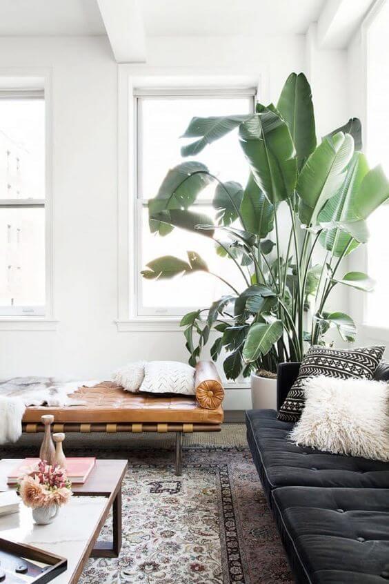 Grote kamerplanten - Ventrio | Interieur & Lifestyle Blog