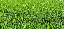 Nieuwe tuin aanleggen? Doe dat met graszoden!